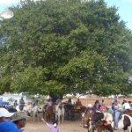 cavalgada em homenagem ao cel manoel jose de almeida 20120722 1150517427