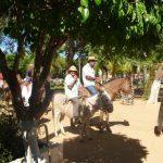 cavalgada em homenagem ao cel manoel jose de almeida 20120722 1694992033