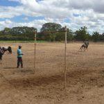 cavalgada em homenagem ao cel manoel jose de almeida 20120722 1870925662