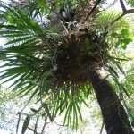 Floresta nativa