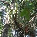 Floresta região de Juvenília